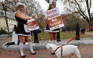 俄羅斯白狗因黑色濃眉遭拒養 最終成為網紅