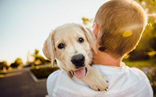 墨尔本宠物狗胃肠病毒肆虐 人类也可被感染