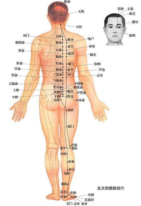 在中醫觀點裡,後腦主要為足太陽膀胱經所轄,足太陽膀胱經循後腦,過頸項,下背部,足太陽膀胱經絡阻滯不通,易造成後腦疼痛。