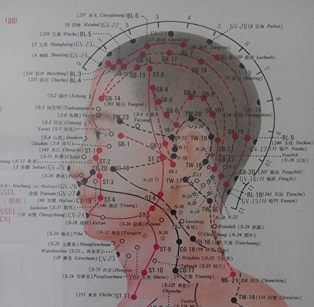 人體十二經絡中六條陽經循行皆上頭部。