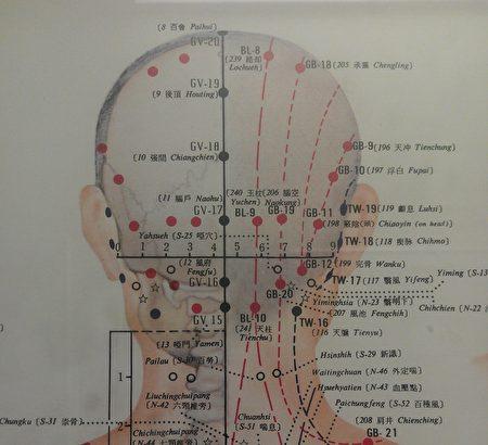 人体十二经络中六条阳经循行皆上头部。