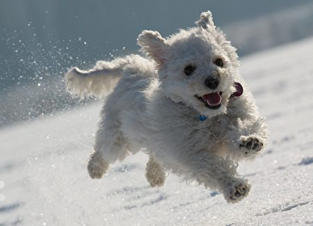 """A dog named """"Lucky"""" runs through the snow on the frozen lake Helenesee near Frankfurt (Oder), eastern Germany, on February 12, 2012. Temperatures remain cold in Germany as the death toll from Europe's big freeze rose past 550. AFP PHOTO / PATRICK PLEUL GERMANY OUT"""