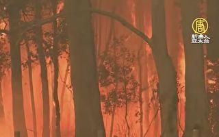 森林大火 鸟可能也是纵火疑犯?