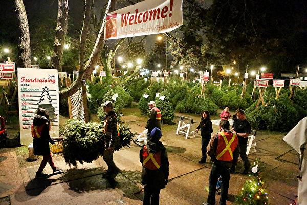 非营利机构利亚阿姨之家在温哥华格兰维尔(Granville)夹54街的圣诞树卖场今年是25年周年庆,该机构一直致力于为大温地区需要帮助的孩子和母亲提供服务。