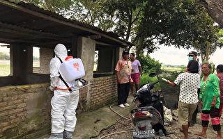 印尼官員證實爆發非洲豬瘟 近3萬頭豬隻死亡
