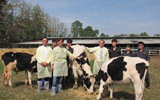全球首例 屏科大成功培育耐热型ST荷兰牛