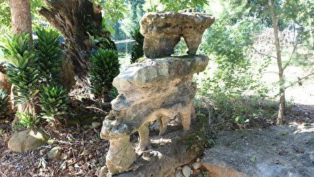 園區有不少台灣國寶馬齒石。