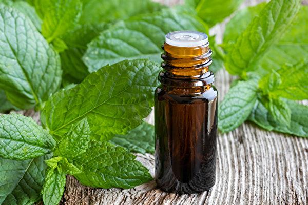 欧薄荷精油有助于提升专注力和警觉性。(Shutterstock)