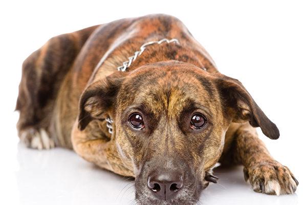 sad mixed breed dog. isolated on white background Fotolia