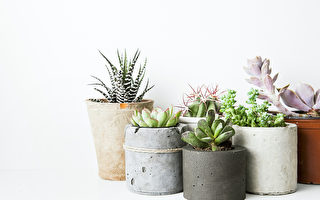 選擇盆栽 你的星座適合什麼室內植物?(上)
