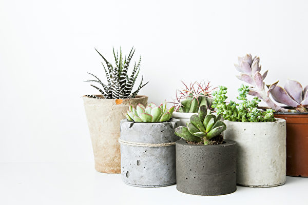 Succulents and cactus in different concrete pots on the white shelf. Scandinavian hipster home decoration Fotolia