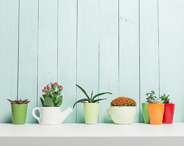 House plants, succulents Fotolia