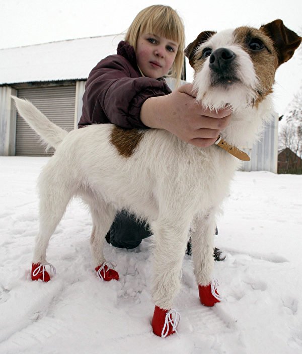 "BOESEL, GERMANY: Eight-years old Christine pets her terrier ""Idefix"" wearing red dog shoes, 27 January 2005 in Boesel, northern Germany. The shoes are made of soft plastic and are supposed to protect dog paws against de-icing salt in winter. AFP PHOTO DDP/DAVID HECKER GERMANY OUT (Photo credit should read DAVID HECKER/DDP/AFP via Getty Images)"
