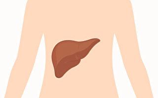 肝脏负有排毒的重要任务,通过一些外在表现探知肝功能。(Shutterstock)