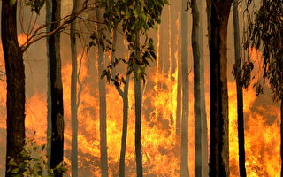 支援澳洲森林灭火 三名美消防员遇难