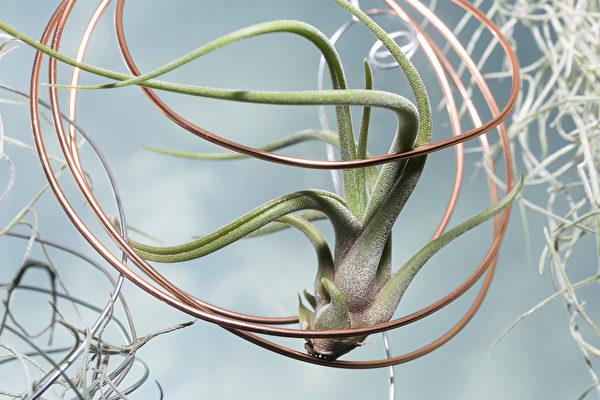 新手也養得活 10種容易照顧的室內植物