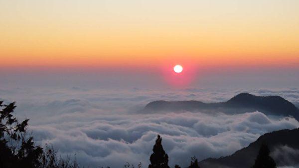 阿里山白樱花之美--台湾特有福尔摩沙樱