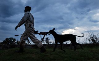 失蹤30小時陷入昏迷 俄羅斯女孩被獵犬找到