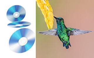 澳洲艺术家用千百个CD片雕塑彩虹动物光彩耀人