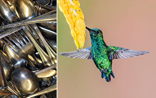 汤匙和刀叉不只是餐具 艺术家打造成生动的小鸟