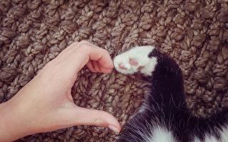 【猫的二三事】饲主如何向猫儿表达感情?