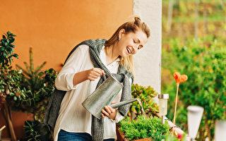 新买的盆栽很快就凋零?家庭盆栽的浇水技巧