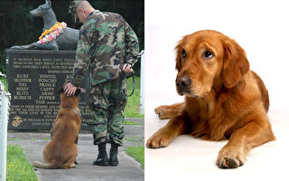 狗狗忠誠賺人熱淚!7種為人類貢獻一生的工作犬