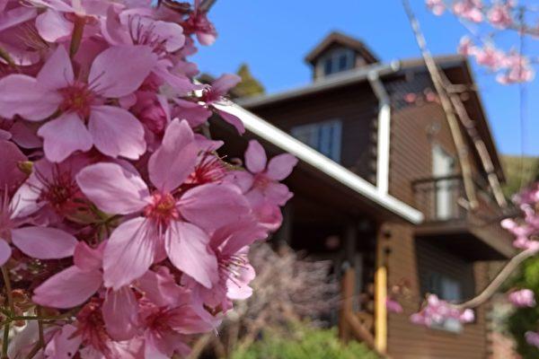 拉拉山櫻花之美 台攝影師:賞櫻的世外桃源