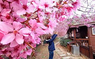 台摄影师:拉拉山樱花之美 赏樱的世外桃源