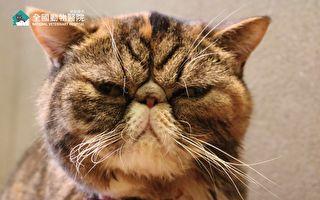 """冷知识!从""""胡须""""更了解猫咪的心情"""