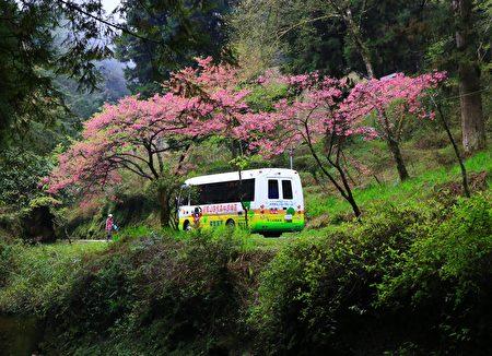 電動遊園車與山櫻花。