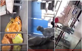 武汉网友暗访医院见证8具尸体 当晚被抓