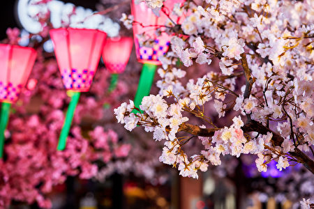 MITSUI OUTLET PARK台中港,营造中部海线拟真樱花林,巧妙运用永生花的技巧,让染井吉野樱的花期长达三个月。