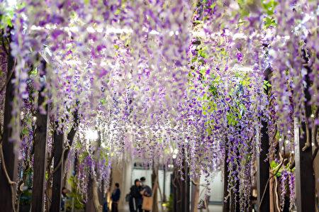"MITSUI OUTLET PARK林口即日起推出春季限定的""紫藤花海秘境"",民众来到""紫藤花廊""可以欣赏花穗如瀑布倾泄而下的紫藤花美景。"