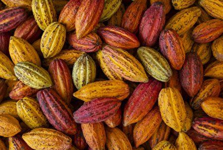 從果農收果、發酵,到製作成一片巧克力,為期大約2個月。