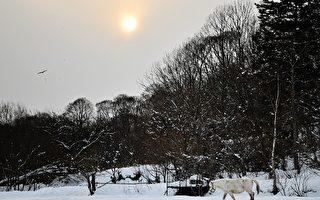日本北海道有多冷? 泡麵放戶外凍成冰棒