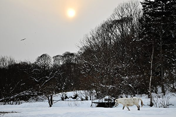 日本北海道有多冷? 泡面放户外冻成冰棒