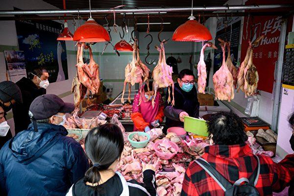中共肺炎持续 中国大规模杀鸡 进口美活禽