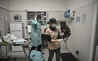 意大利中共肺炎死者 從發病到去世平均8天