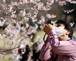 組圖:疫情下 東京上野公園湧現賞櫻人潮