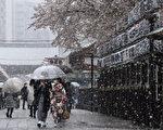 組圖:日本東京降雪 滿開櫻花與積雪同框