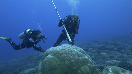 台大地质系很嗨实验室(HISPEC)研究团队使用高精确铀钍定年技术,协助澳洲国立大学教授妮莉莉•亚伯兰(Nerilie Abram)进行珊瑚标本年龄分析,建立印度洋千年来的气候纪录。