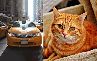 乌克兰猫咪计程车 猫咪陪坐让乘客不想下车