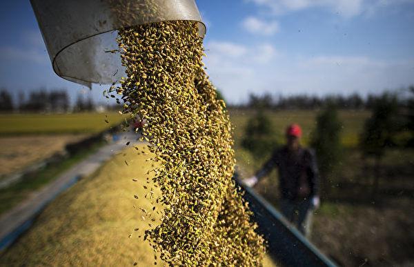 全球多國自保禁糧出口 大陸將現糧食危機