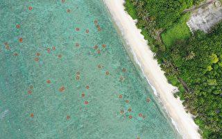 「海龜島嶼」太平島 千隻綠蠵龜現蹤