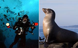 潛水被海獅包圍 攝影師:像在小狗坑中太神奇了!