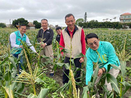 """新竹市议员李妍慧及曾资程期望将""""友善农业""""技术种植的成功经验大力推广,除解决畜牧业产生的废水困扰,还可发展为在地特色,一举数得。"""