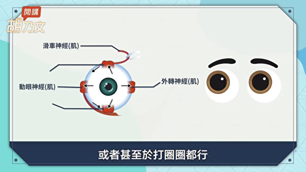 双眼复视常常是眼睛的肌肉出问题。外转神经、动眼神经和滑车神经,这三种神经带动了眼睛肌肉的活动。(胡乃文开讲提供)