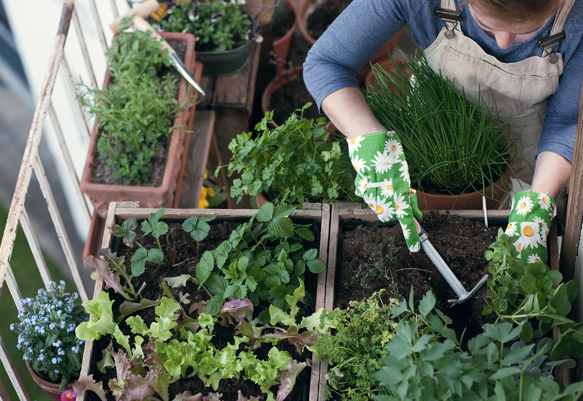 面对居家隔离 乐当城市农夫 (下):8种好收成的盆栽作物