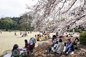 日本传统 卯月赏花寻古道 祭拜贤圣慰今人